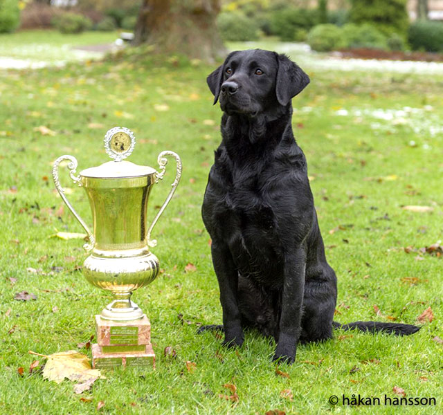 Poacher vinnare Markprøvemesterskab 2015